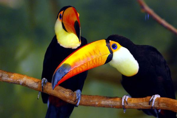 มี แหล่ง นก ที่ นัก ดู นก