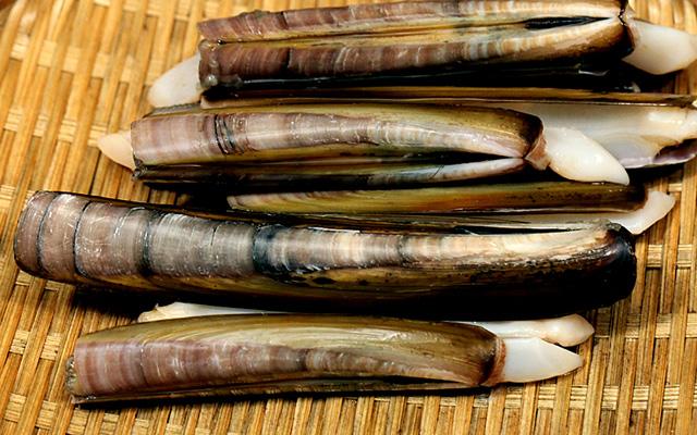 Solen-strictus-Gould. หอยหลอด